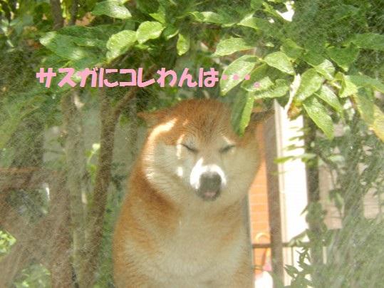 20140625-06.jpg