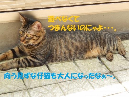 20140627-08.jpg