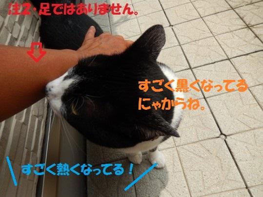 20140627-11.jpg
