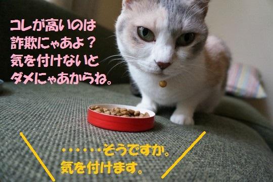 20140630-04.jpg