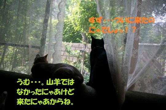 20140706-01.jpg