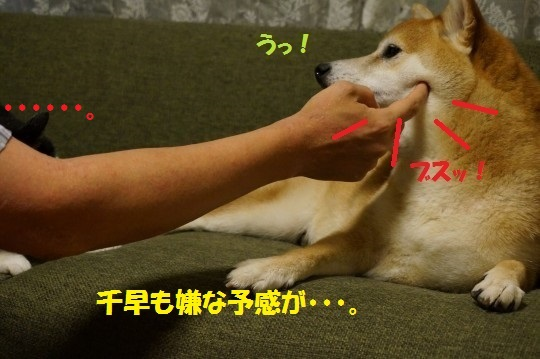 20140707-04.jpg