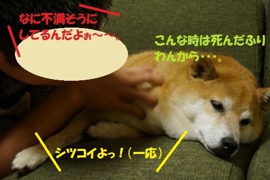 20140707-09.jpg