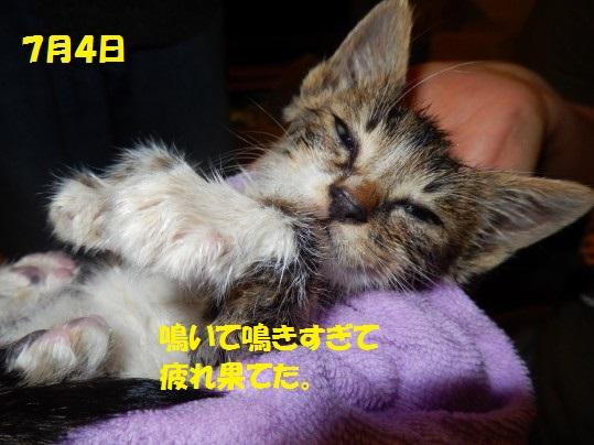 ちょび1-01
