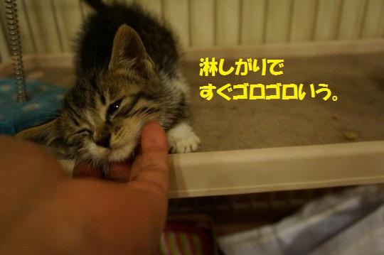 ちょび1-08