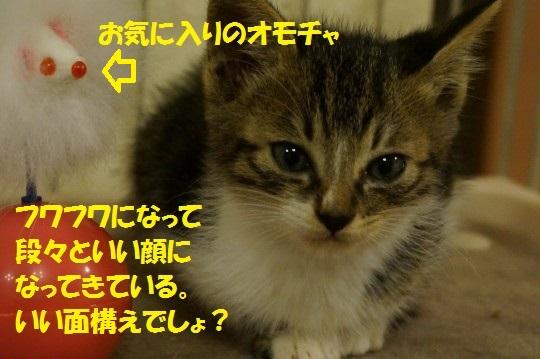 ちょび1-14