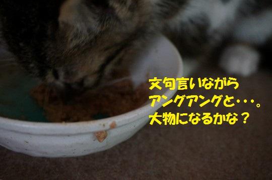 ちょび1-05