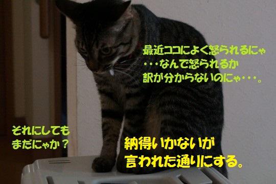 20140709-05.jpg