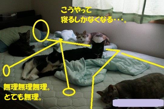 せみ1-04