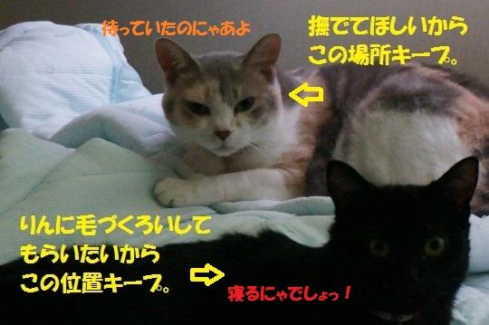 せみ1-03