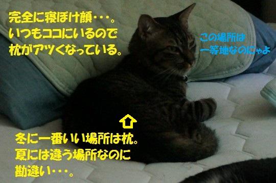 せみ1-02