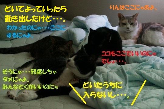 せみ1-06