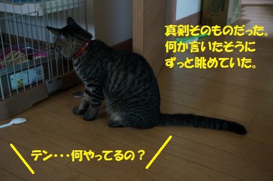 20140718-01.jpg