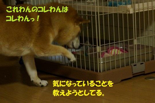 20140719-04.jpg