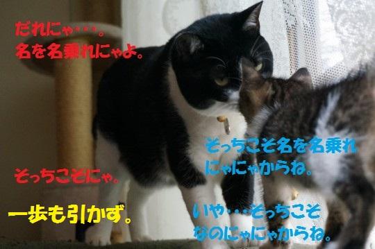 20140724-10.jpg