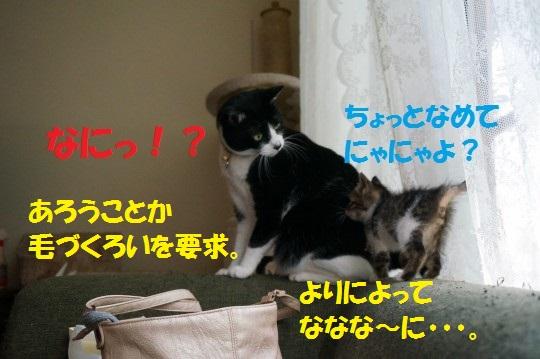 20140724-11.jpg