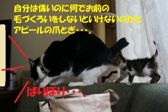 20140724-12.jpg