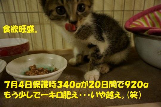 ざんねんなしっぽ1-04