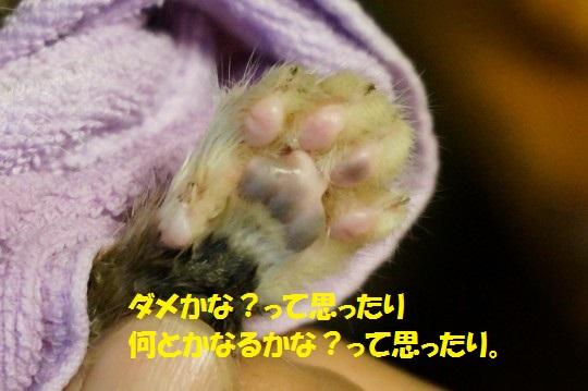 ざんねんなしっぽ1-05