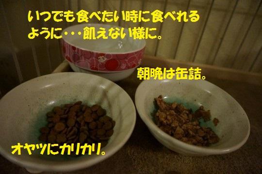 ざんねんなしっぽ1-03