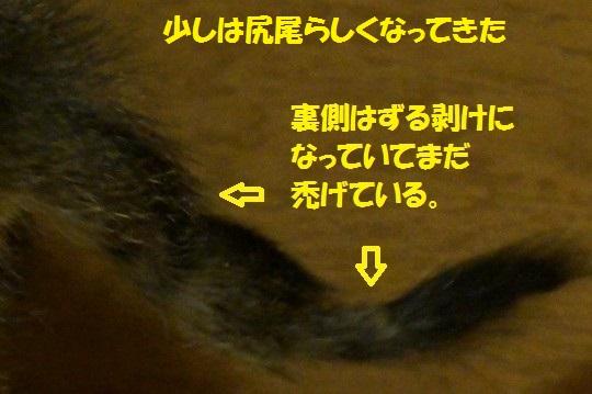 ざんねんなしっぽ1-02