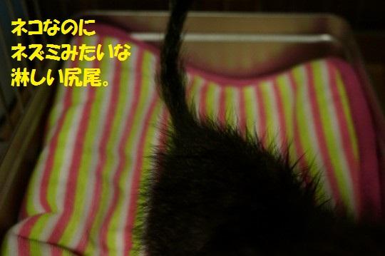 ざんねんなしっぽ1-01
