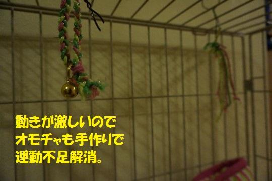 ざんねんなしっぽ1-10