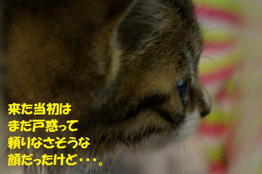 ざんねんなしっぽ1-08