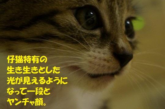 ざんねんなしっぽ1-09