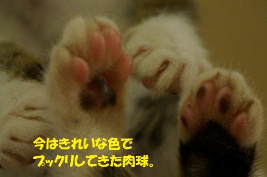 ざんねんなしっぽ1-06