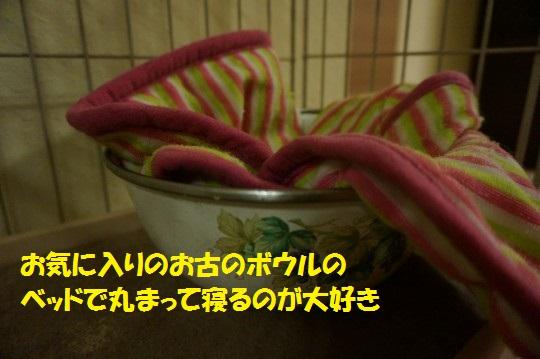 ざんねんなしっぽ1-07
