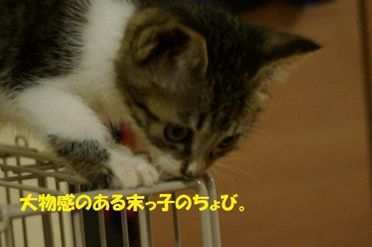 ざんねんなしっぽ1-00