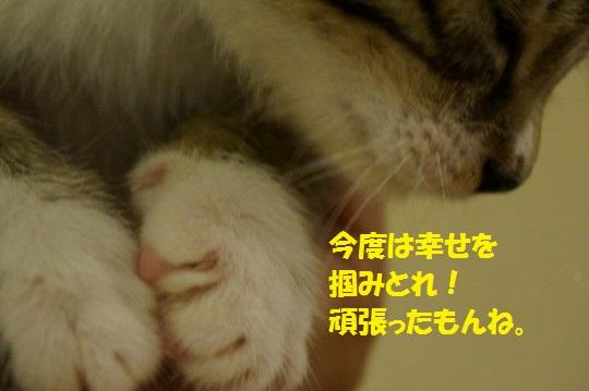 ざんねんなしっぽ1-13