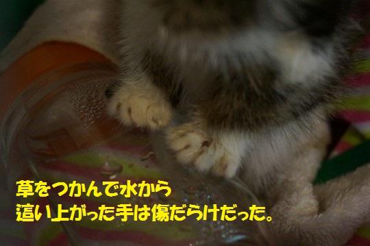ざんねんなしっぽ1-12