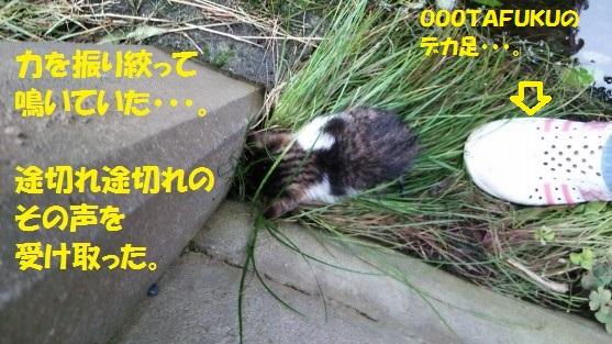 ざんねんなしっぽ1-11