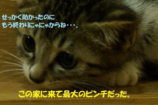 20140725-01.jpg