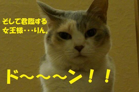 20140725-03.jpg