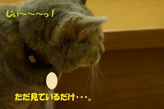 20140725-07.jpg