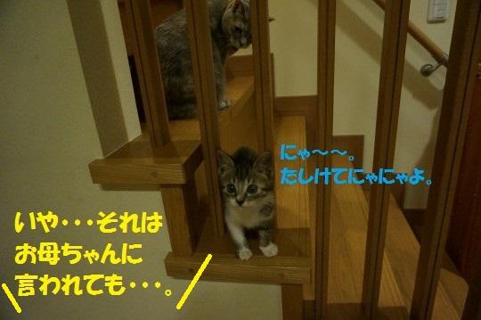 20140725-09.jpg