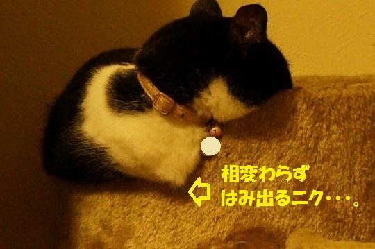 20140730-01.jpg