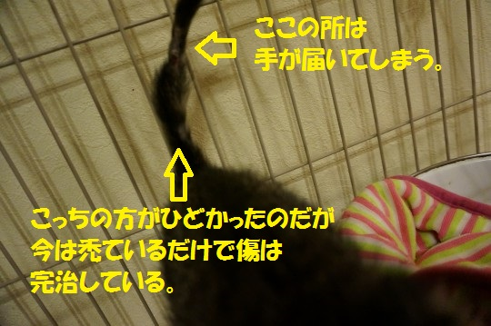 20140731-02.jpg