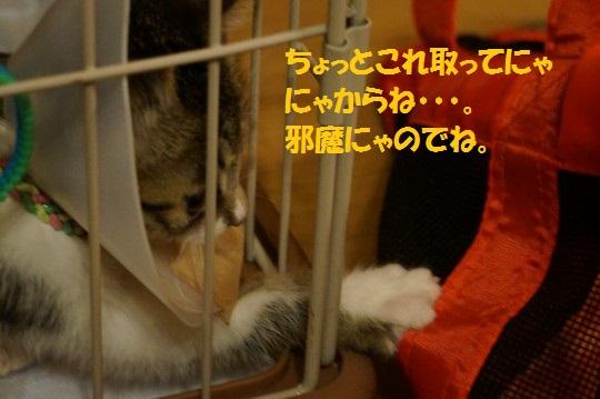 20140731-09.jpg
