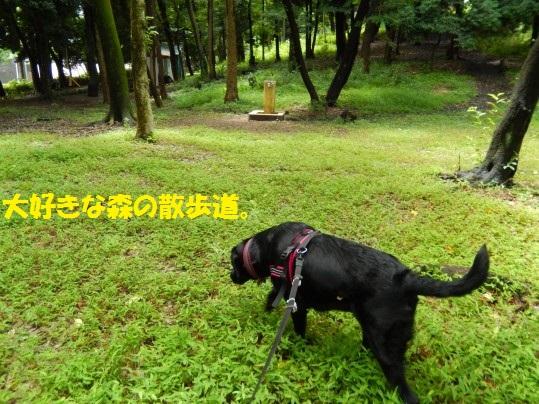20140804-02.jpg