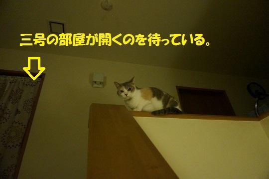 20140804-05.jpg
