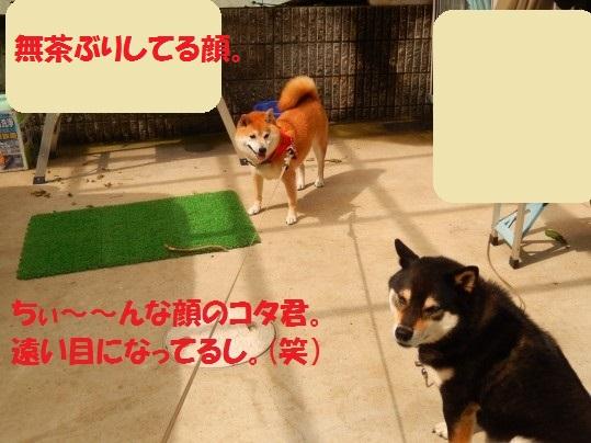 20140805-04.jpg