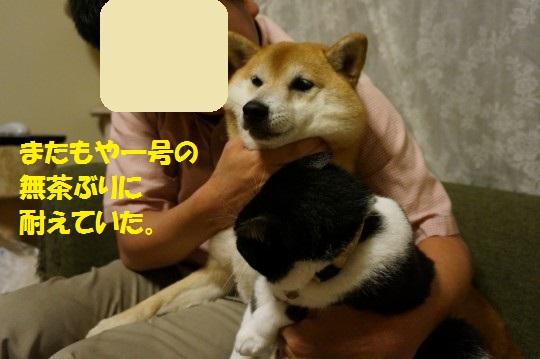 20140805-06.jpg