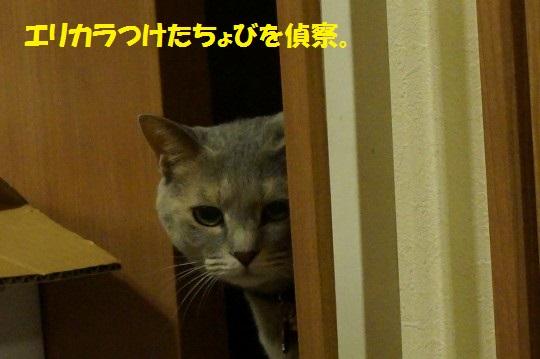 20140805-09.jpg
