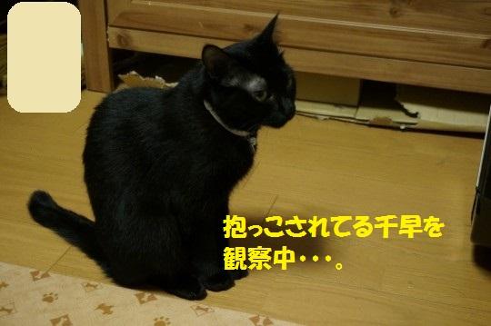 20140807-03.jpg