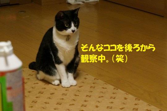 20140807-04.jpg