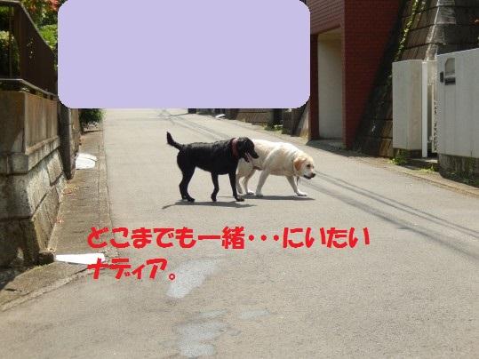 20140808-06.jpg